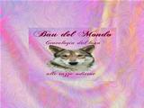 Anteprima www.bau-del-mondo.com