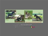 Anteprima www.auximum.it