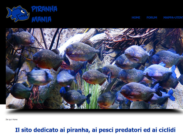Anteprima www.piranhamania.net