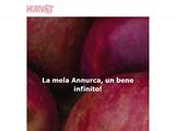 Anteprima www.nurvast.com